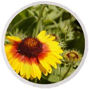 Yellow And Red In The Sunshine Round Beach Towel