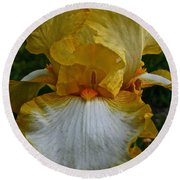 Yellow And White Iris Round Beach Towel