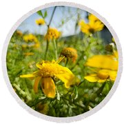 Yellow Blooming Wildflowers Round Beach Towel