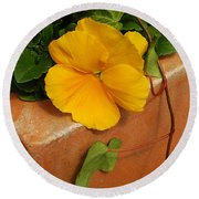Yellow Blossom On Planter Round Beach Towel