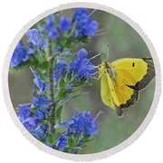 Yellow Cabbage Butterfly Round Beach Towel