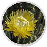 Yellow Cactus Flower Round Beach Towel