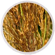 Yellow Feather Reed Grass Round Beach Towel