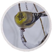 Yellow Finch Cold Snow Round Beach Towel