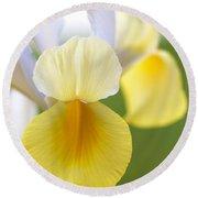 Yellow Iris Round Beach Towel