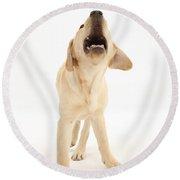 Yellow Labrador Retriever Pup Barking Round Beach Towel
