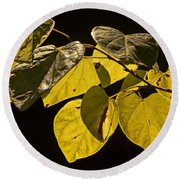 Yellow Leaves On A Tree Branch Round Beach Towel