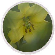 Yellow Lily Flower Round Beach Towel