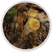 Yellow Mushrooms Round Beach Towel