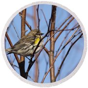Yellow-rumped Warbler - Placid Round Beach Towel