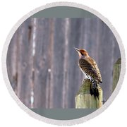 Yellow-shafted Flicker Posing Round Beach Towel