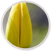 Yellow Tulip Bud Round Beach Towel