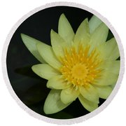 Yellow Waterlily - Nymphaea Mexicana - Hawaii Round Beach Towel
