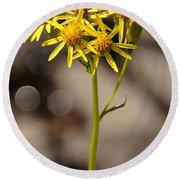 Yellow Wildflower At Crater Lake Round Beach Towel