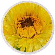 Yellow Zinnia 9494 4286 Round Beach Towel
