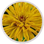 Yellow Zinnia_9480_4272 Round Beach Towel