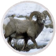 Yellowstone Big Horn Sheep Round Beach Towel