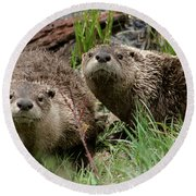 Yellowstone River Otters Round Beach Towel