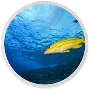 Yellowtail Snapper, Molokini Crater Round Beach Towel