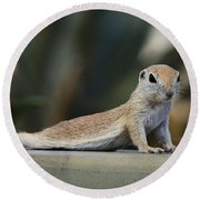 Yoga Ground Squirrel Style Round Beach Towel