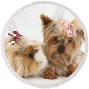 Yorkshire Terrier And Guinea Pig Round Beach Towel