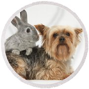 Yorkshire Terrier And Young Silver Round Beach Towel