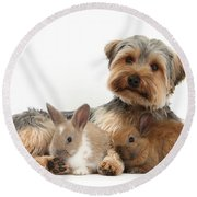 Yorkshire Terrier Dog And Baby Rabbits Round Beach Towel