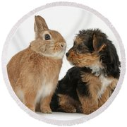 Yorkshire Terrier Pup With Rabbit Round Beach Towel
