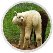 You Can't Sneak Up On Alpacas Round Beach Towel