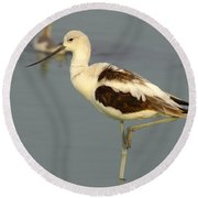 Young American Avocet Round Beach Towel