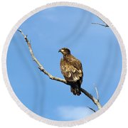 Young Bald Eagle Round Beach Towel