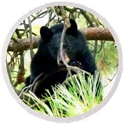 Young Black Bear Round Beach Towel