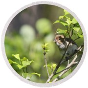 Young Blue Grosbeak Round Beach Towel