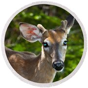 Young Buck 2 Round Beach Towel