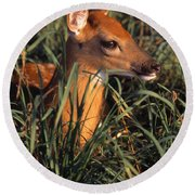 Young Deer Laying In Grass Round Beach Towel