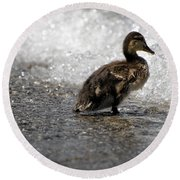 Young Duck On The Beach Round Beach Towel