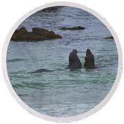 Young Elephant Seals Sparring Round Beach Towel