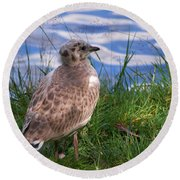 Young Gull Round Beach Towel