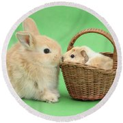 Young Rabbit With Baby Guinea Pig Round Beach Towel