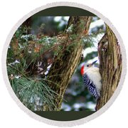 Young Red-bellied Woodpecker Round Beach Towel