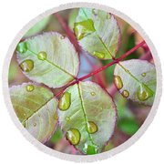 Young Rose Leaves Round Beach Towel