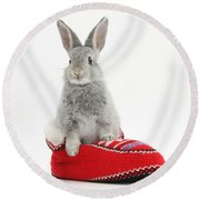 Young Silver Rabbit In A Knitted Slipper Round Beach Towel