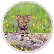 Young Wolf Cub Peering Over Log Round Beach Towel
