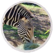 Zebra At Lunch Round Beach Towel