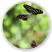 Zebra Butterflies Hanging Out Round Beach Towel