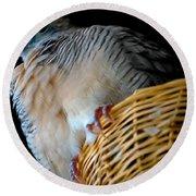 Zebra Dove From Above Round Beach Towel