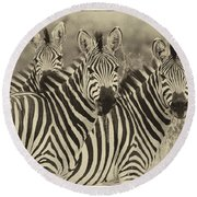 Zebra Trio Round Beach Towel