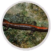 Zig-zag Salamander Round Beach Towel