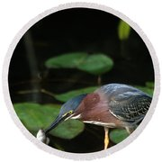 A Green Heron With Fish Round Beach Towel