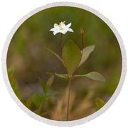 Arctic Starflower Round Beach Towel